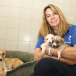 Dubai dog shelter urges residents to foster pets for summer