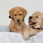 Can I foster puppies in UAE?