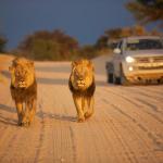 7 Reasons why Botswana is a great safari destination