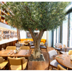 From LA to Dubai: Urth Caffe Brings a New Generation of Organic Wellbeing to City Walk