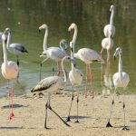 Al Wathba Wetland Reserve in Abu Dhabi Wins Coveted Spot on IUCN's Green List