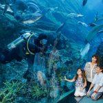 Visit Dubai Aquarium & Underwater Zoo  and get 50% off Unlimited Pass at VR Park