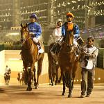 meydan horse racing